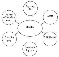 Main characteristics of report writing